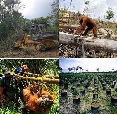 explotacion, desforestacion, desastre ecológico y social
