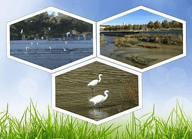 flora-aves-rio