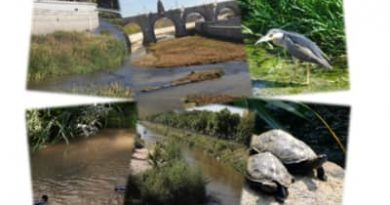 Nuevo contrato de mantenimiento acorde a la renaturalización para el Manzanares