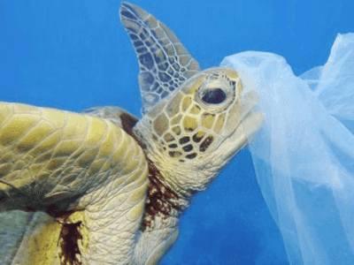 tortuga marina microplásticos