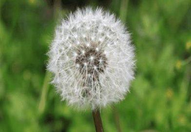 Información diaria de los niveles de polen que más afecta a los alérgicos