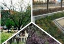 Zonas verdes de tres plazas  de Carabanchel rehabilitadas por el Ayuntamiento