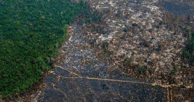 Estamos entrando en una era de pandemias, para frenarla hay que proteger los bosques